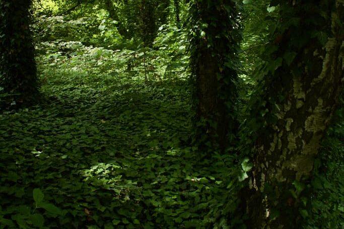 PAN garden nature - Botanical Garden of the Polish Academy of Sciences 10