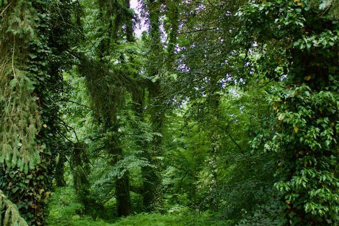 PAN garden nature - Botanical Garden of the Polish Academy of Sciences 7